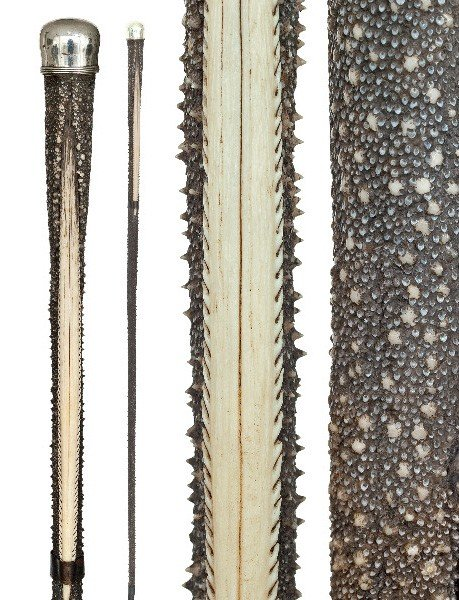 120: Stingray Tail Cane-19th Century-Fashioned of the t