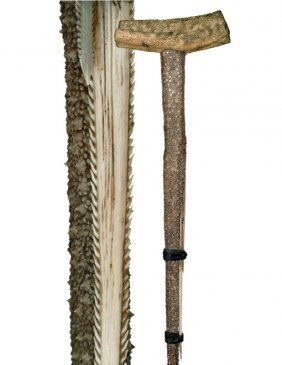 23: 23. Stingray Tail Cane-19th Century-Fashioned of th
