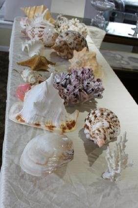 LARGE SEA SHELL COLLECTION