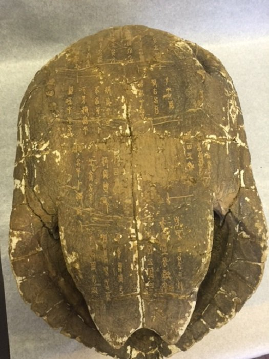 A Rarely Ancient Turtle Shell Carved Oracles - 2
