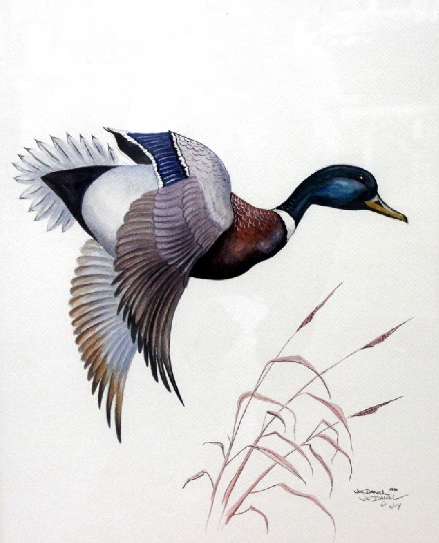 Joe Daniel Mallard Watercolor on Paper