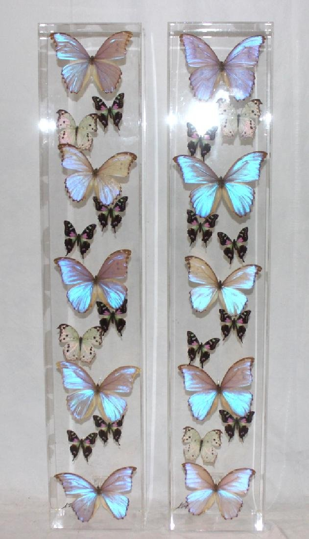 Pair of Butterfly Specimens Mounted In Lucite Shadow