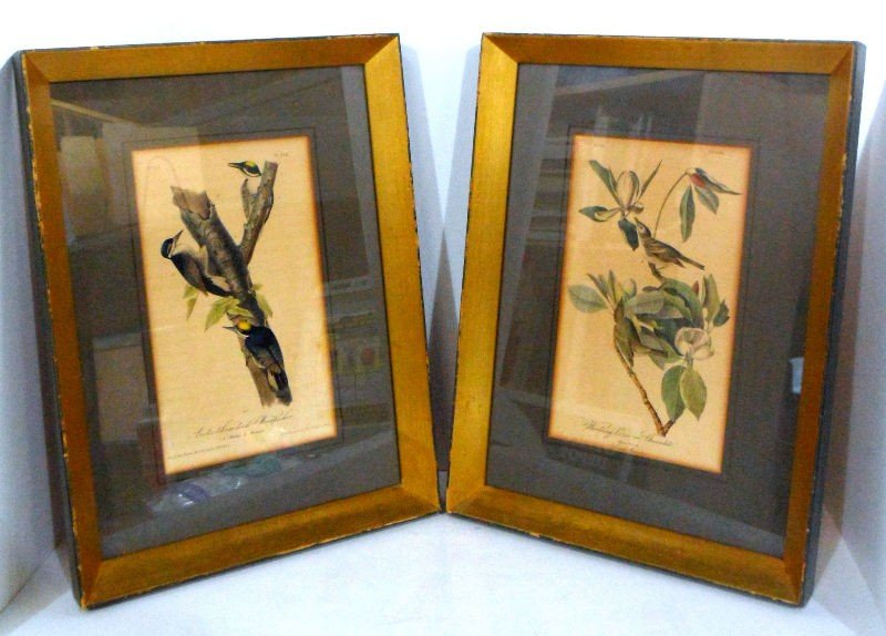 247: J.J. Audubon Royal Octavo Edit. Lithographs (Pair)