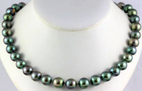 14kt Yg 10.30-11.50mm. South Sea Tahitian Pearl