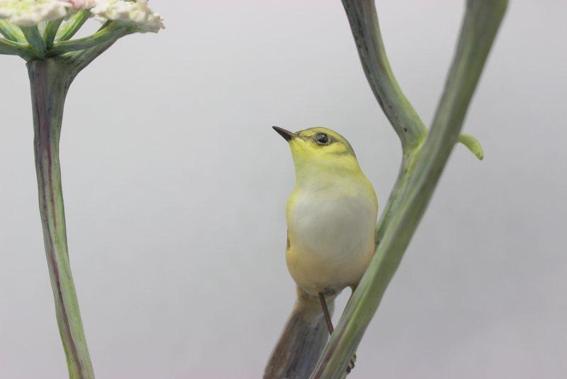 Royal Worcester Bisque Bird & Flowers - 2