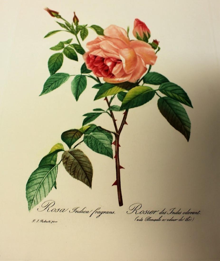 Lot of Miscellaneous Botanical Prints - 2