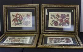 Four4 Framed Botanical Prints