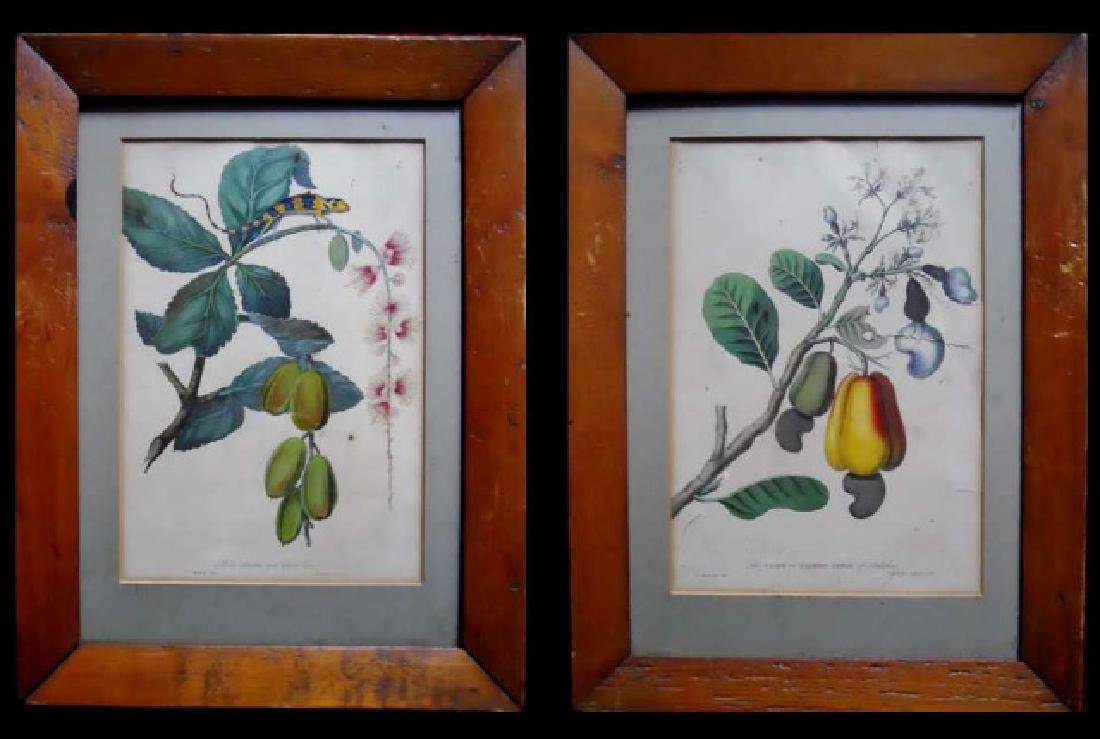 Pair 18th C. Hand Colored Botanical Prints, (2pc)
