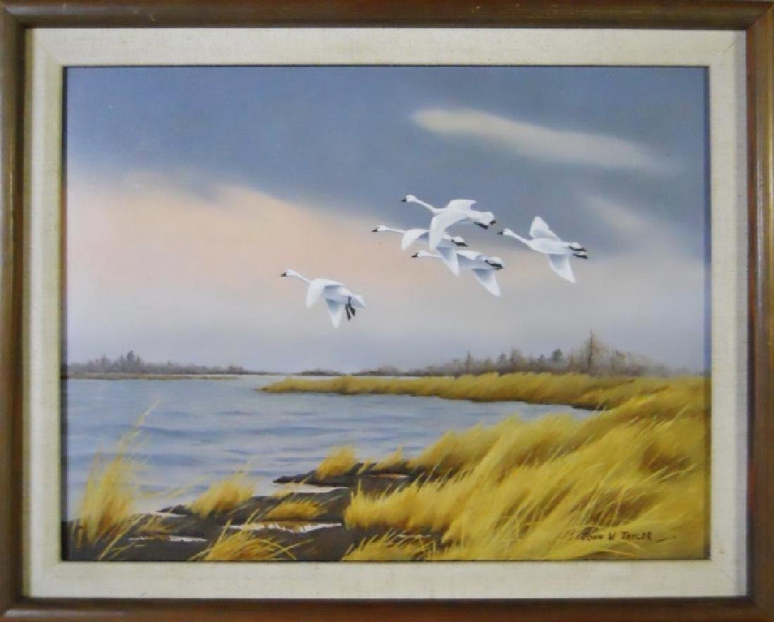 Oil on Board Wildlife Painting, John W. Taylor - 2