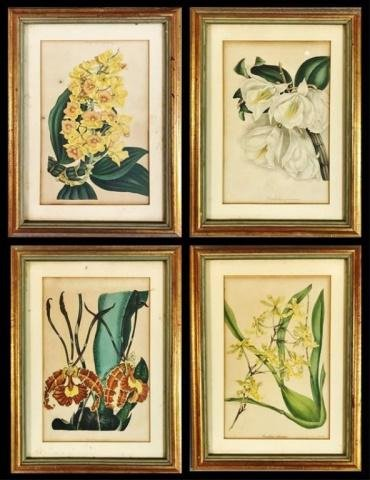 19th C. Hand Colored Botanical Prints, (4pc)