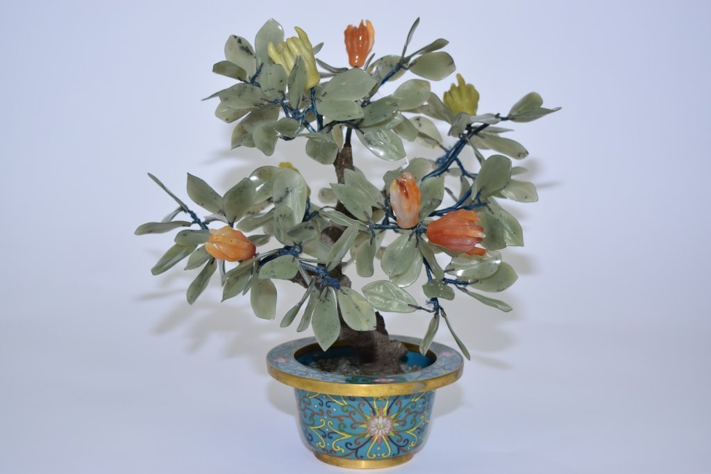 Chinese Jade Tree