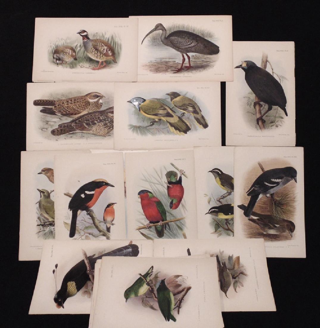 [Ornithology]  Keulemans, Gronvold, 77 plates