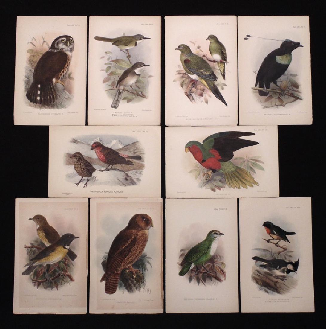 [Ornithology]  Keulemans, Gronvold, 77 plates - 2