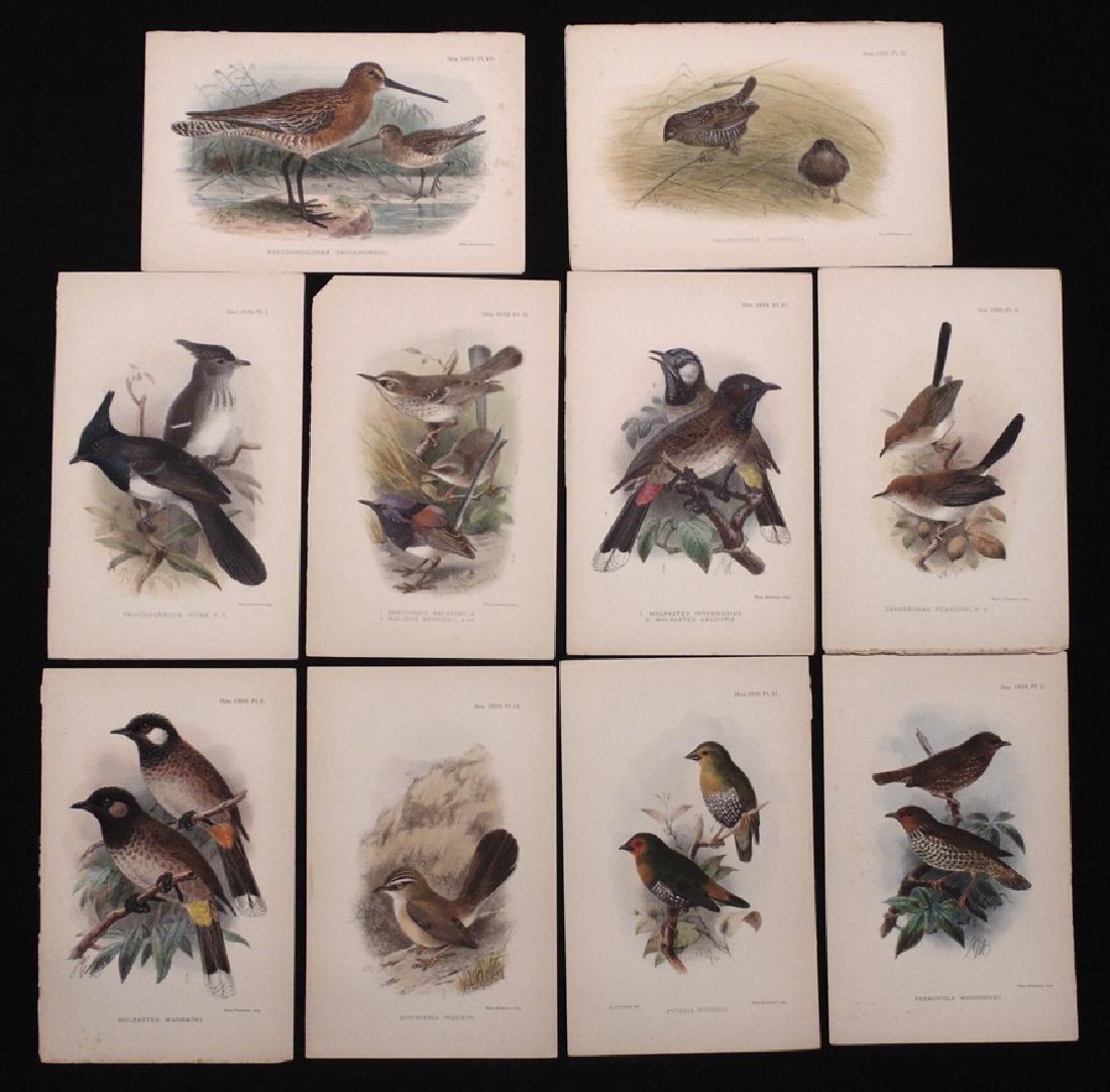 [Ornithology]  Keulemans, Gronvold, 77 plates - 3