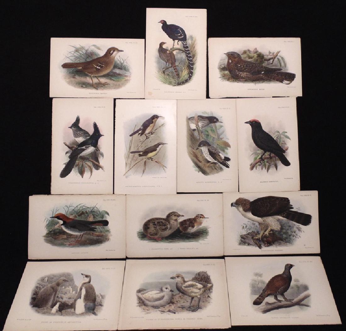 [Ornithology]  Keulemans, Gronvold, 77 plates - 4