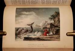Bible Illustration