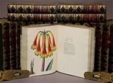 Loddiges Botanical Cabinet, 1818-1833