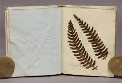 Ferns Book of Specimens
