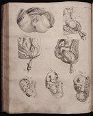 Encyclopaedia Britannica.  First Ed., 1771
