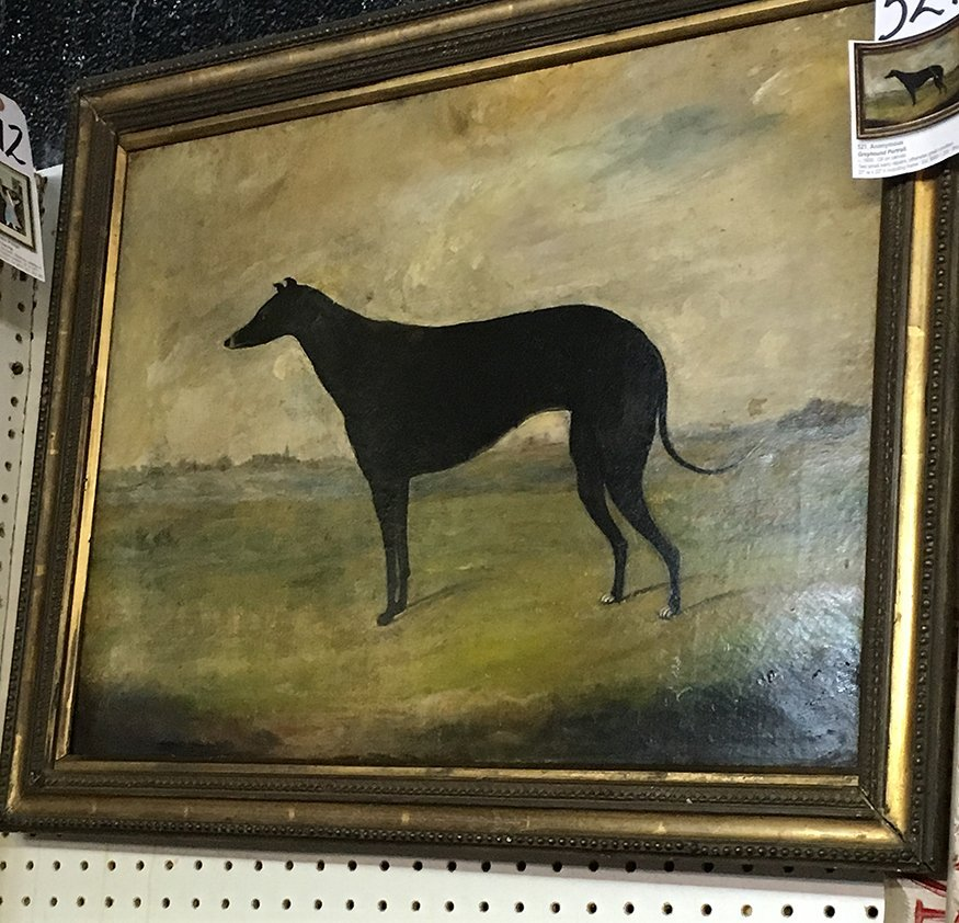 Anonymous Greyhound Portrait. - 4
