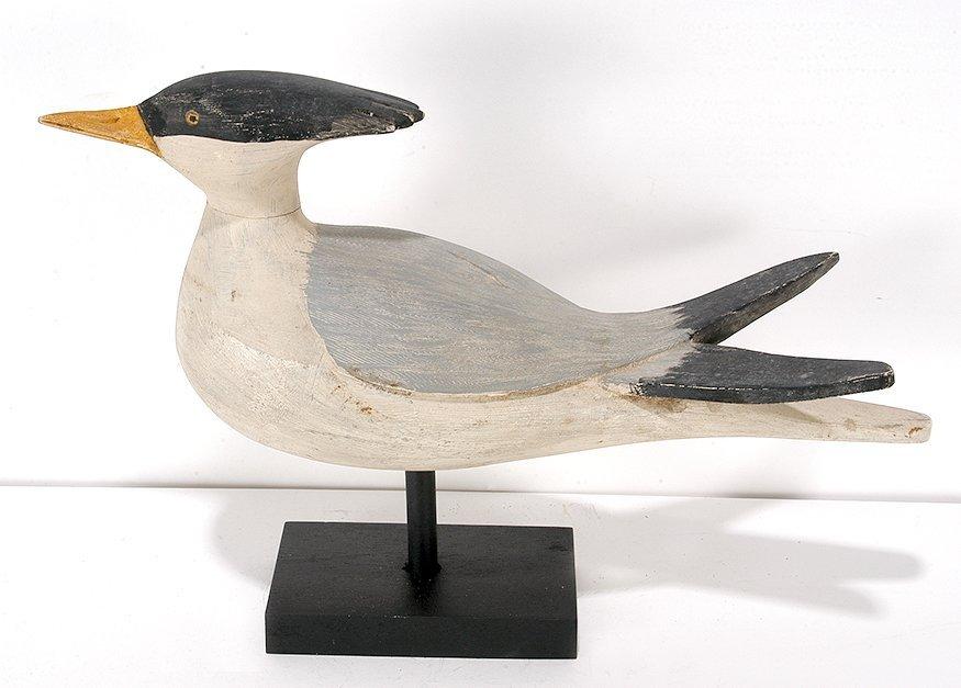Stickup Crested Tern.