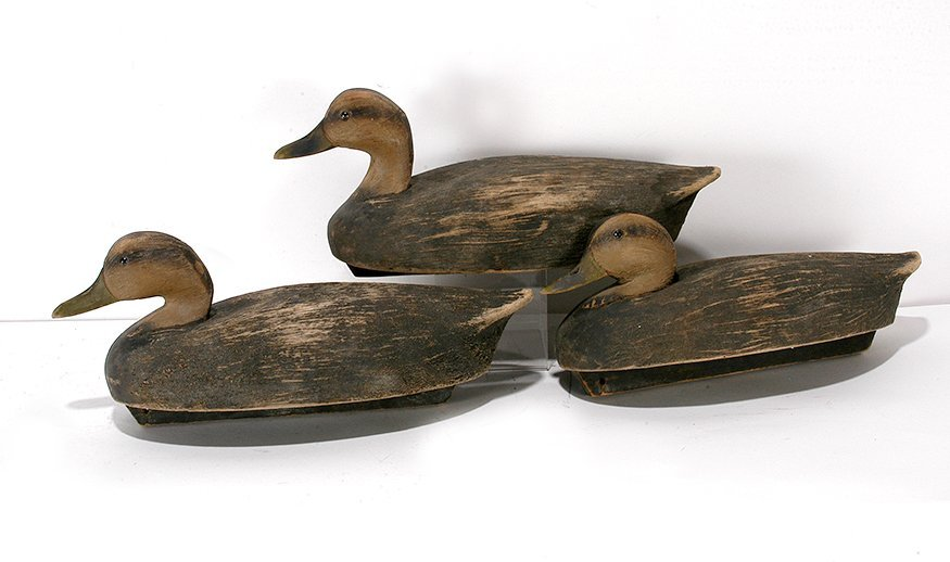 Wildfowler Company. 3 Black Ducks.
