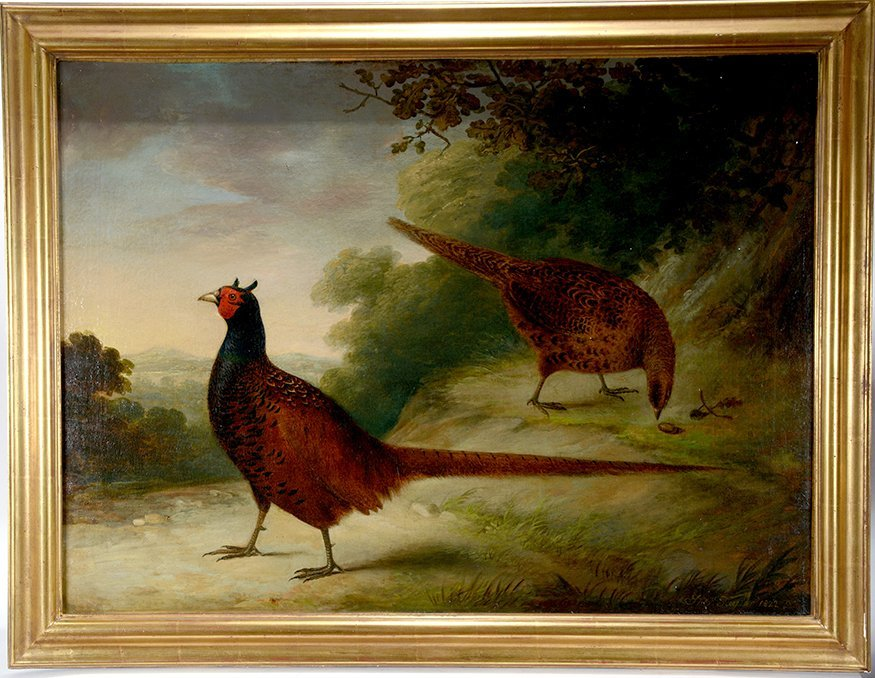 Thomas Taylor. Pheasants.