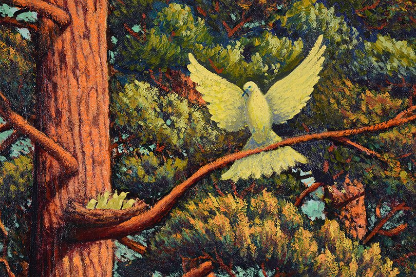 G. Bocconi. White Dove With Nest In Redwood Tree. - 2