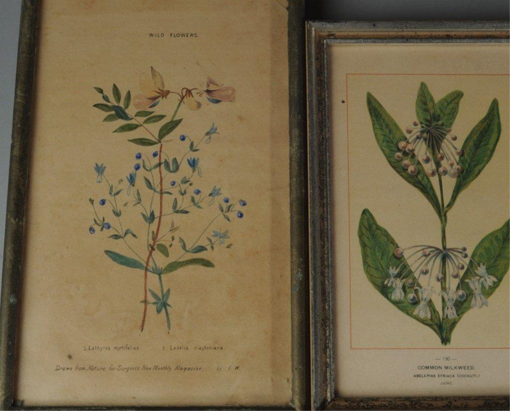 Four Botanical Prints