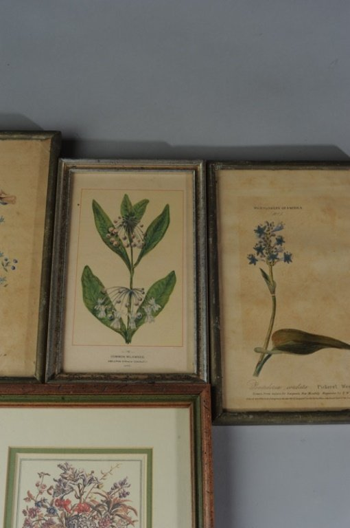 Four Botanical Prints - 2