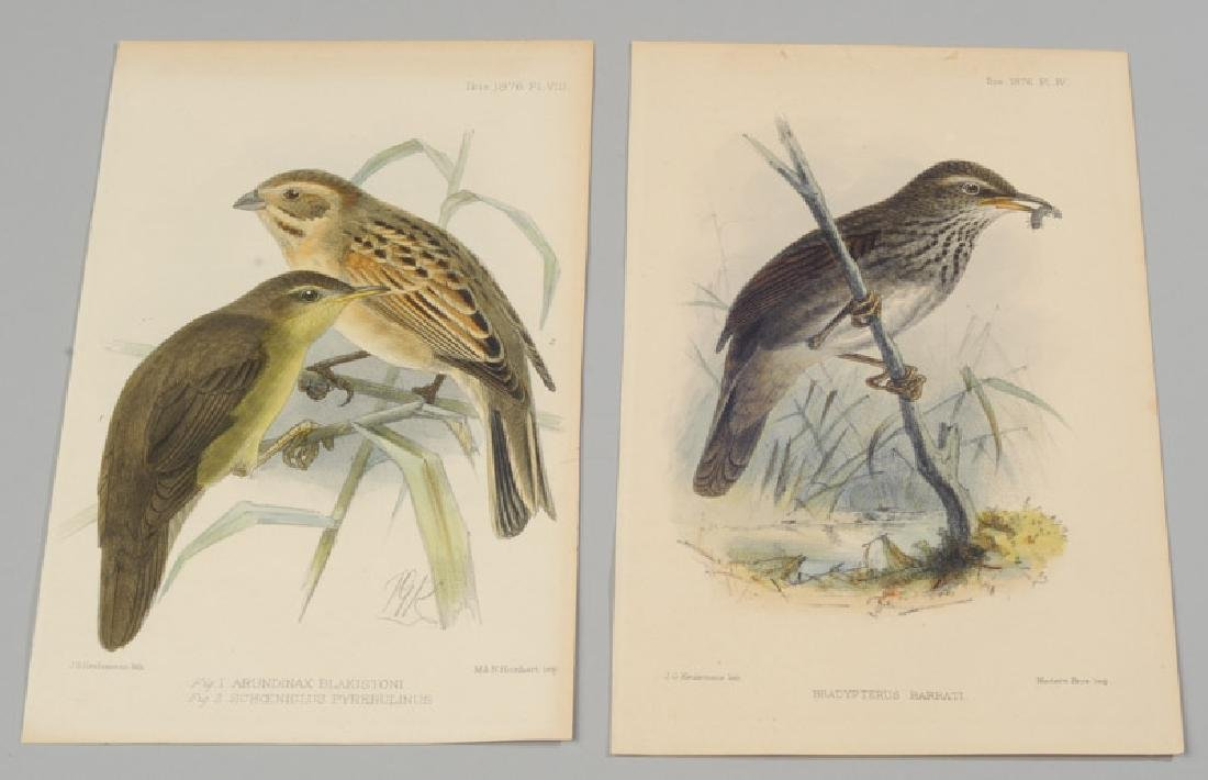Two Keulemans Lithographs of Birds