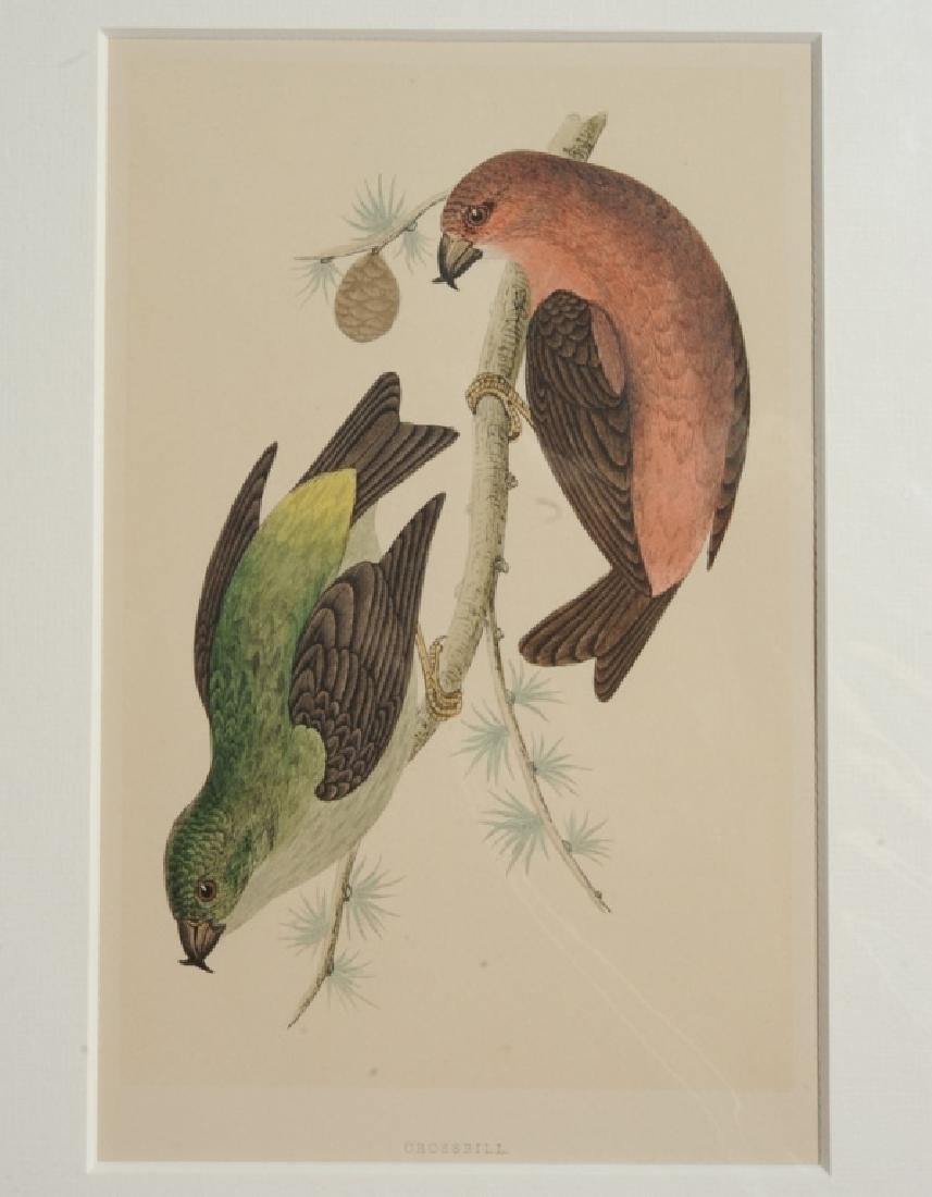 """A History of British Birds"" Four Engravings"