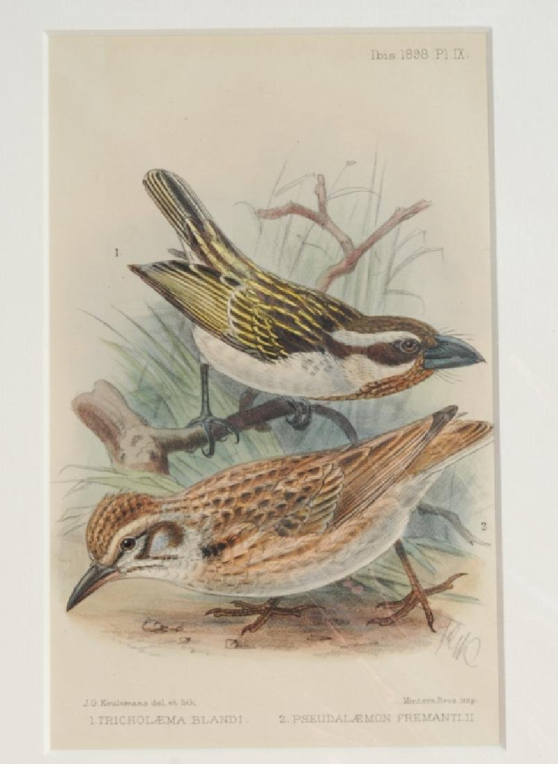 4 Antique Ornithological Hand Colored Lithographs