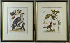 18th C. George Edwards Ornithological Engravings