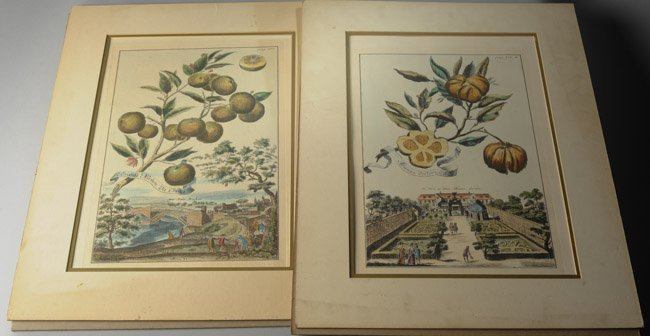 Pair of Early Botanical Engravings