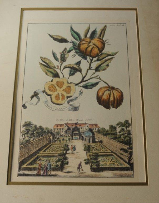 Pair of Early Botanical Engravings - 3