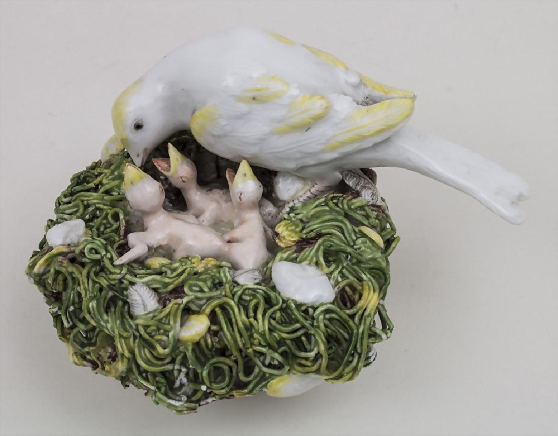 Kanarienvogelnest mit 3 Jungen / A canary bird's nest