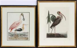 A WILSON AND CATESBY HAND COLORED ENGRAVINGS