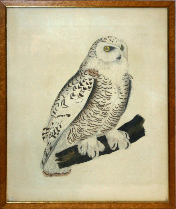 "030201: COLORED LITHOGRAPH, SNOW OWL, 25"" X 20"""