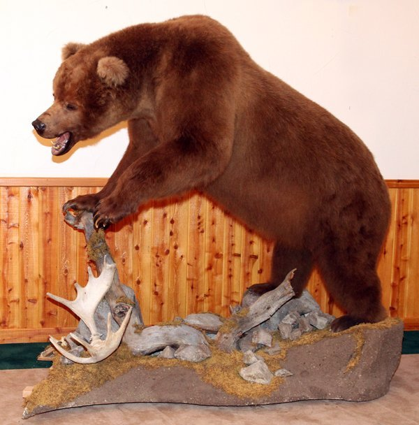 ALASKAN BROWN BEAR FULL BODY TROPHY MOUNT