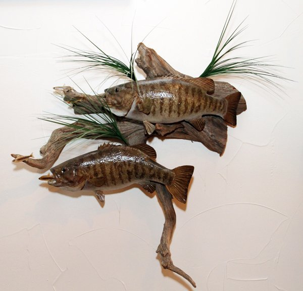SMALLMOUTH BASS TROPHY MOUNTS