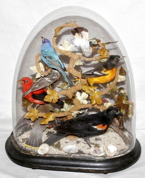 041311: BIRD MENAGERIE UNDER GLASS GLOBE, W/ WOOD BASE