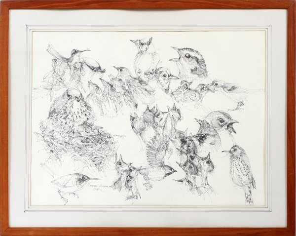 NORMAN BRUMM INK DRAWING YOUNG BIRDS