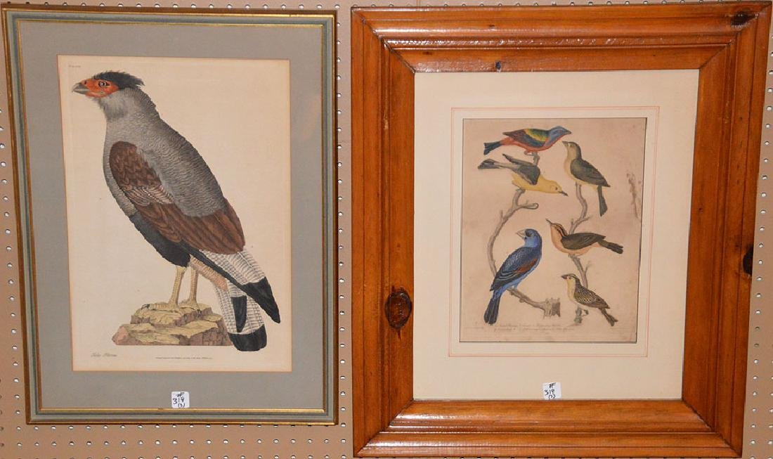 3 Antique Etchings, pr. Bird etchings 13 x 10 inches