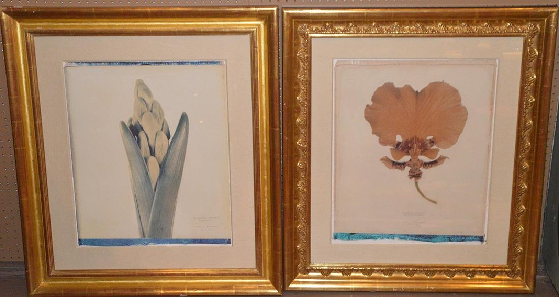 Collection of 6 Prints by Linda Broadfoot