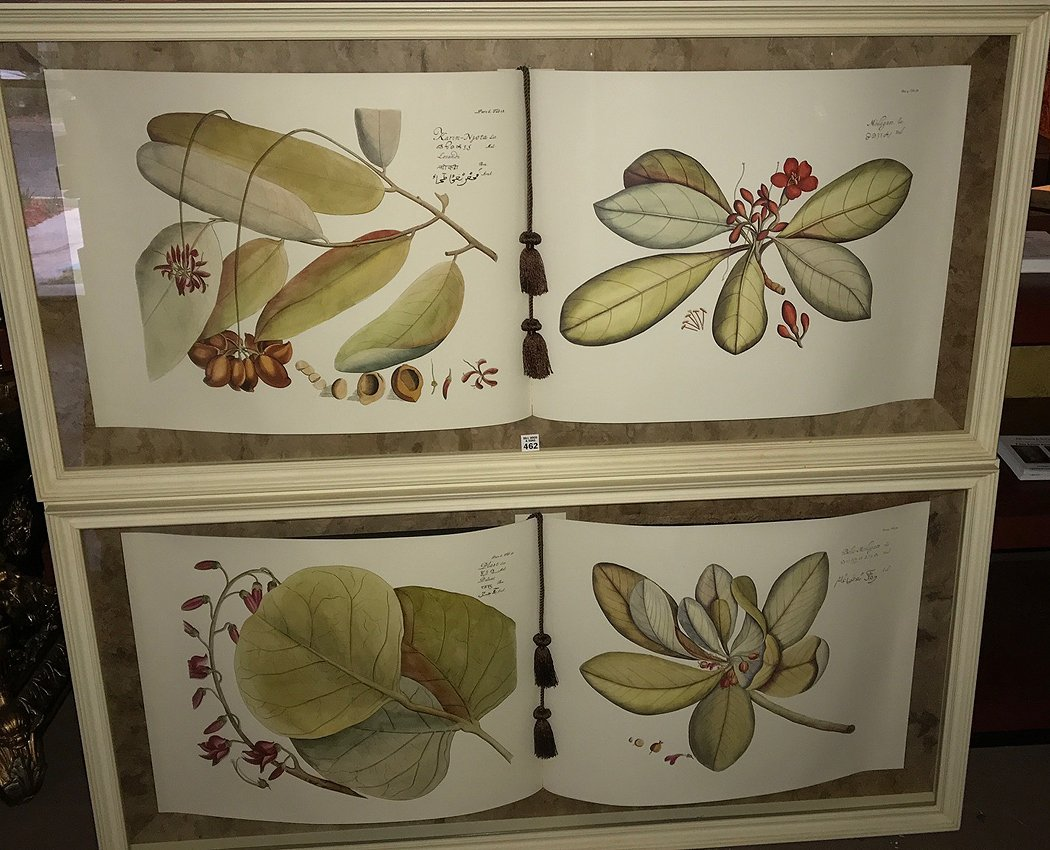Pr. Large Shadowbox framed Decorative Botanical Prints,
