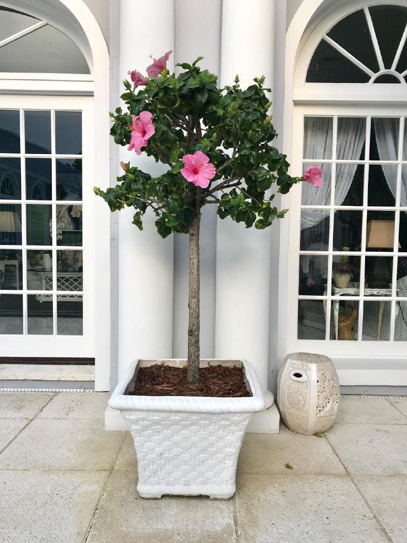 Pair of Cement Basket Weave Planters - White washed
