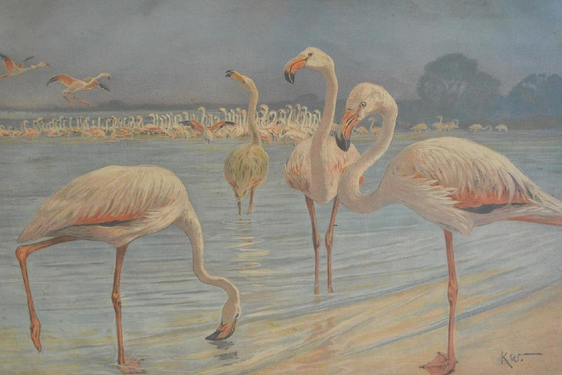 "Mid-Century hand colored lithograph, ""Flamingoes"", - 2"