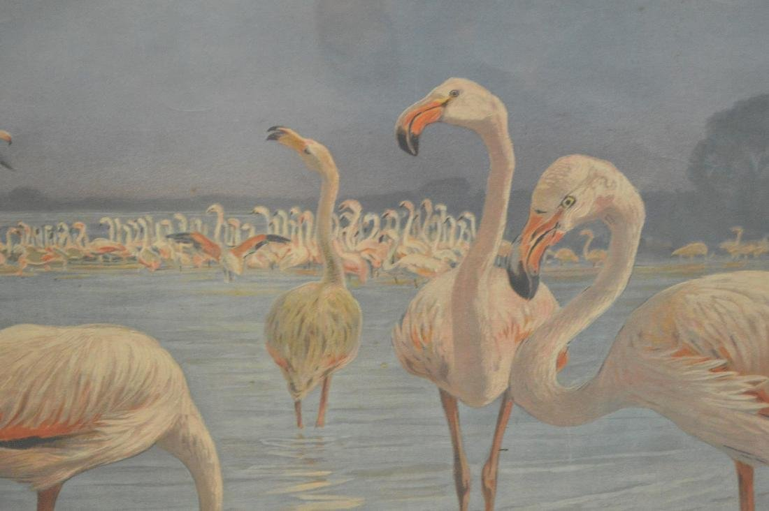"Mid-Century hand colored lithograph, ""Flamingoes"", - 3"