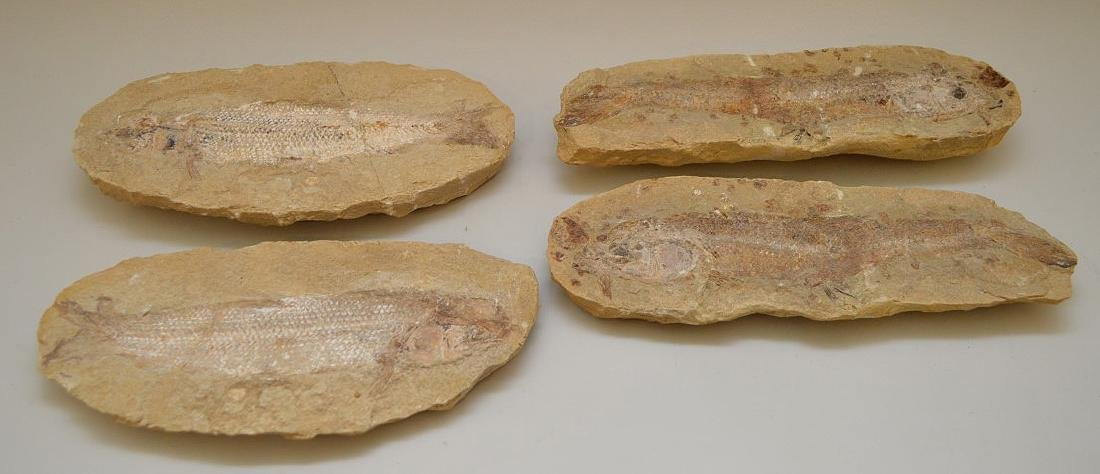 FOUR ANCIENT FISH FOSSILS - preserved in stone. - 3